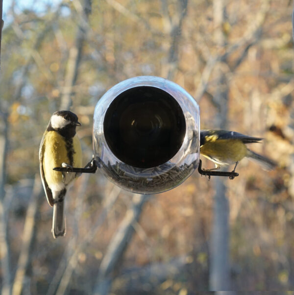 raam vogelhuisje