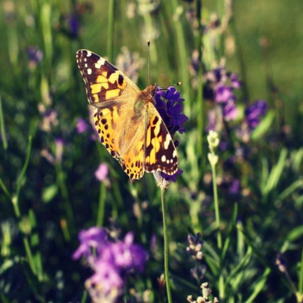 De Bees & Butterfliesmat